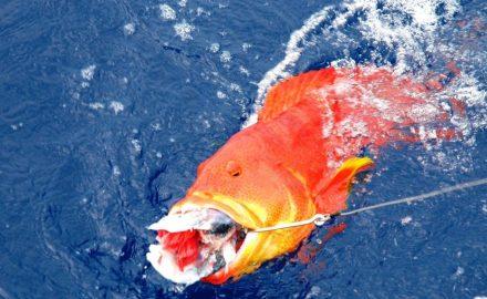 Mauritius paradise fishing