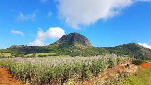 history of sugar cane in Mauritius