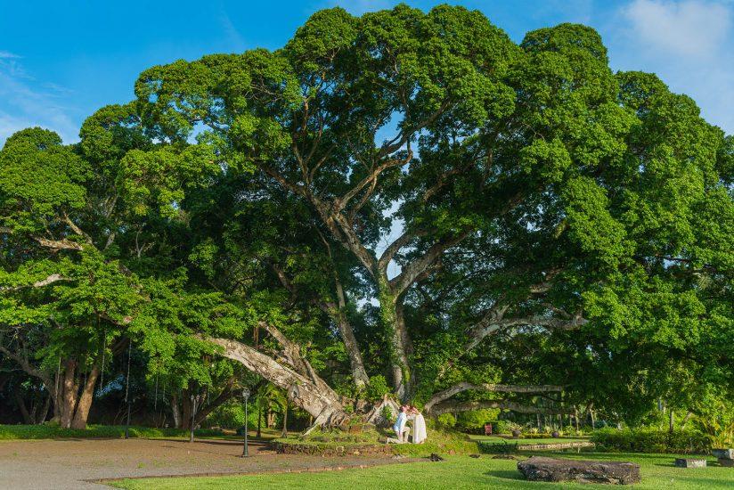 couple posing under a big tree