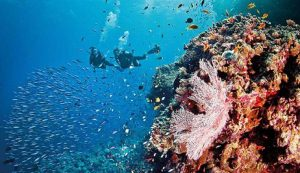 people diving to discover new coral and fish